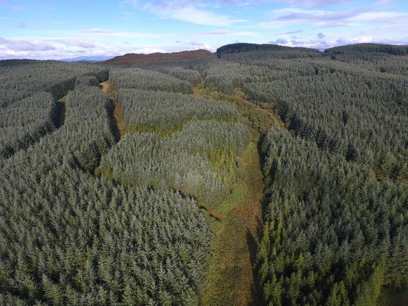 Dumfries forest drone image