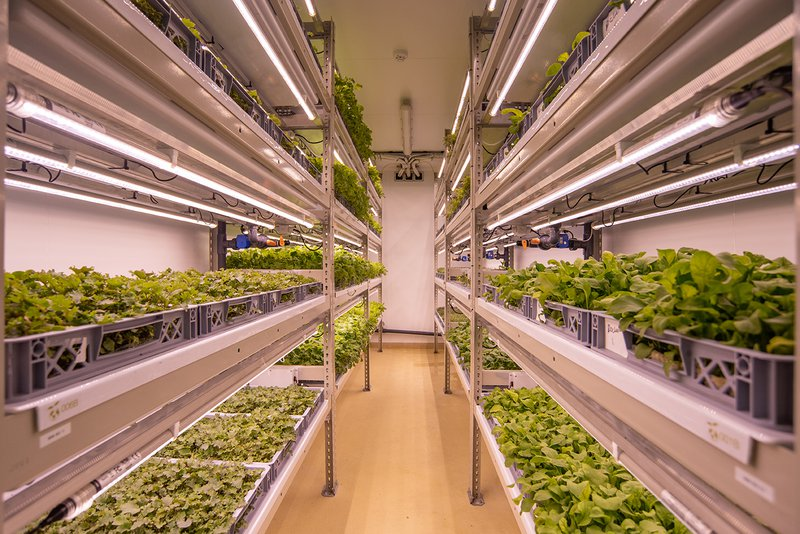 An image of some of Lettuss grow's vertical farms