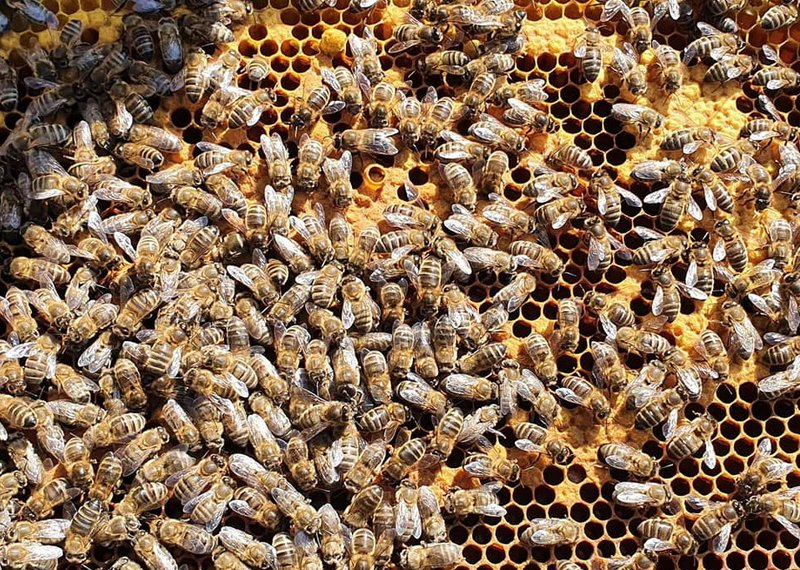 An image of some bees at a mystree hive