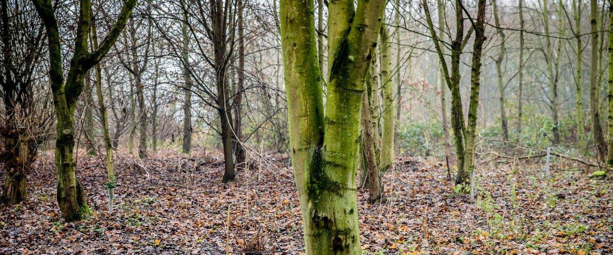 Tree Banner York