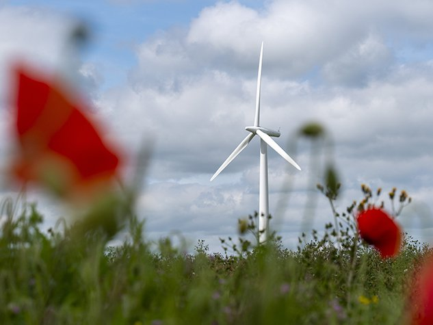 Wind turbines on a field of wildflowers