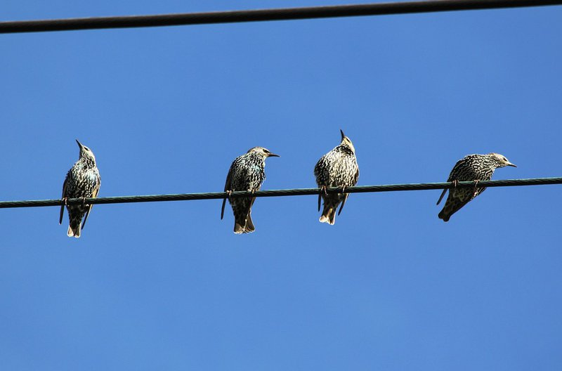 Birds power line