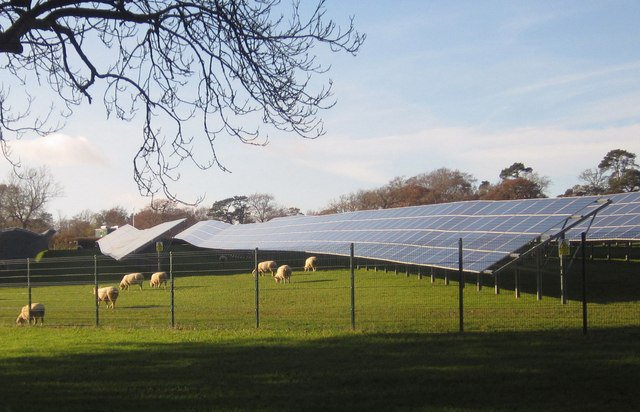 solar farm sheep