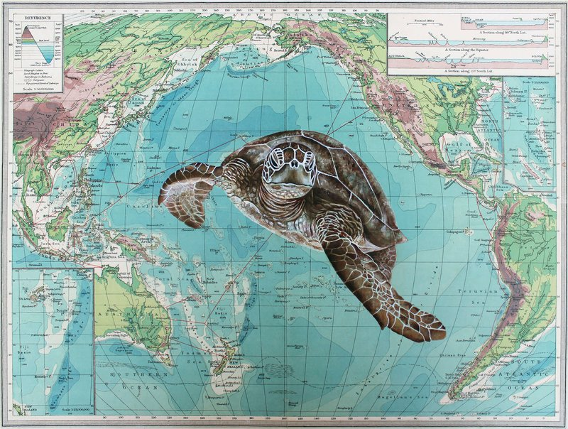 An image from our portraits of the precipice climate art competition, showing a turtle swimming in an ocean on an atlas