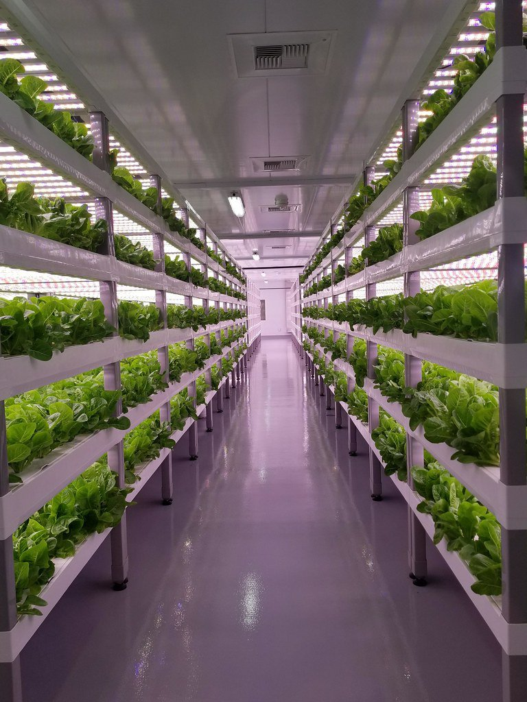 An image of crops grown on stacked shelves